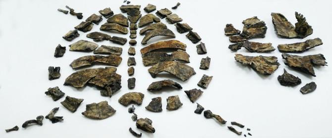 Descubiertos en Ariño (Teruel) los esqueletos más completos de tortugas primitivas del Cretácico de Europa - Noticias de la Ciencia y la Tecnología