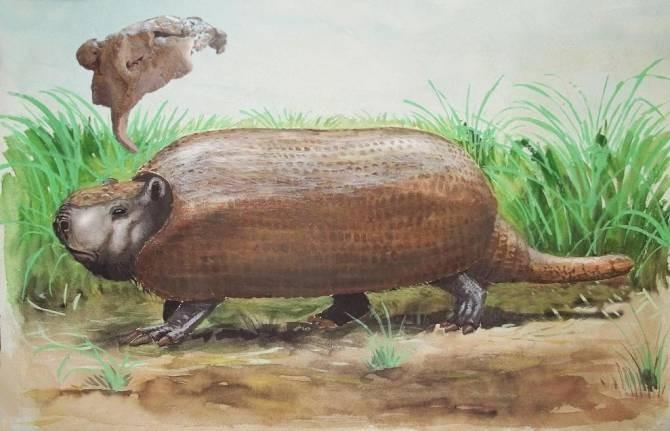 Noticias sobre animales antiguos, esqueletos, fosiles descubiertos en el mundo (fusionado) Img_16477
