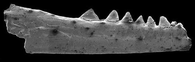 Noticias sobre animales antiguos, esqueletos, fosiles descubiertos en el mundo (fusionado) Img_16528