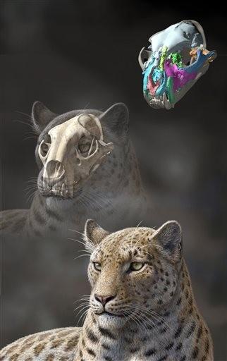 Noticias sobre animales antiguos, esqueletos, fosiles descubiertos en el mundo (fusionado) Img_17241