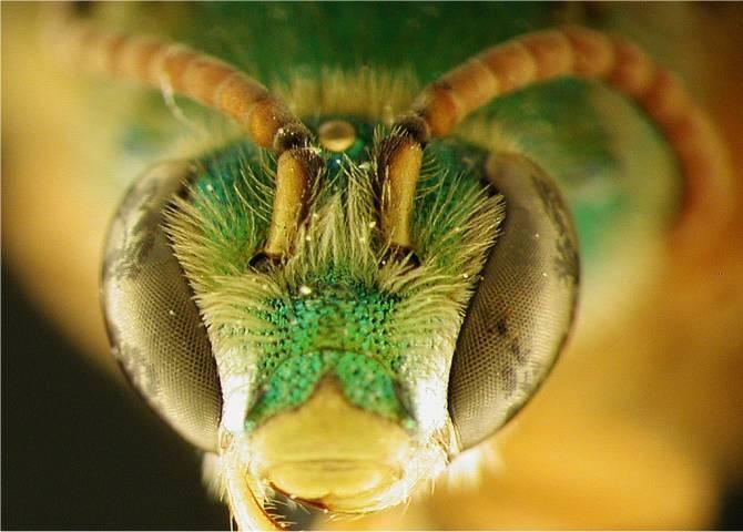 desde el Conurbano.: Veneno de abeja para combatir al cáncer