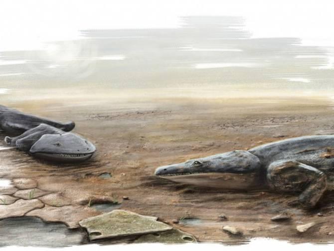 Hallados los fósiles de una especie de salamandra más grande que un ...