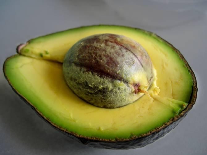 Fruta de aguacate o palta. (Foto: DICYT)
